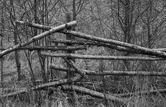 Cross the fence (swordscookie away for a while) Tags: trees ireland dublin broken nature grass fence mono reserve posts swords spg turvey fingal donabate birchpoles