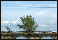concrete nature (xlod) Tags: ocean sea sky usa cloud tree nature water landscape highway meer wasser florida natur himmel wolke landschaft baum floridakeys landstrasse overseashighway