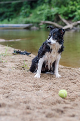 Lara (mcvmjr1971) Tags: travel dog beach brasil swim fun 50mm nikon collie play sopaulo border joy run cachorro viagem litoralnorte sosebastio barradouna f18d lensnikkor d7000 mmoraes