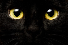 The Black Cat (Tria-media_Sven) Tags: katze cat look eyes augen canoneos5dmarkiii pet bestof flickrchallengewinner flickrchallengegroup macromondays pupils polly pussycat halloween
