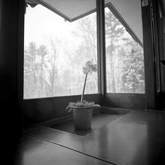 Flower with Snow Outside (G.A.R.) Tags: 120 photoshop lca lomography kodak trix hc110 400 epson v500 vuescan colorperfect