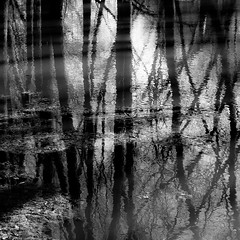 Flooded Banks 006 (noahbw) Tags: trees winter light shadow blackandwhite bw distortion abstract reflection water monochrome forest river square landscape blackwhite woods nikon natural branches desplainesriver d5000 captaindanielwrightwoods noahbw