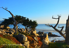Pebble Beach California (SLDdigital) Tags: ocean california trees beach water pacificocean pebblebeach travelphotography californialandscapes coastalcities slddigital