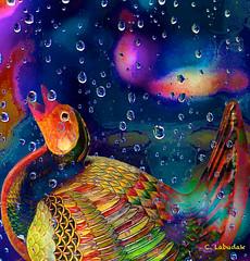 LikeADuckToWater (clabudak) Tags: blue bird texture water duck droplets colorful artistic modernart creativephotography