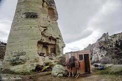 deve (ismail kavakldan (instagram : smileykav)) Tags: nature animal landscape nikon outdoor ngc advanture hayvan