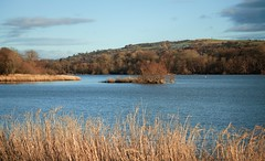 Castle Semple Loch (Mac ind g) Tags: winter walking landscape scotland loch renfrewshire lochwinnoch castlesempleloch clydemuirshielregionalpark castlesemplecountrypark