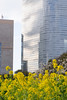 20160221-DSC_0389.jpg (d3_plus) Tags: park street sky urban plant flower building nature japan garden tokyo nikon scenery outdoor daily architectural telephoto bloom 日本 tele streetphoto 東京 nikkor 花 ume 自然 空 dailyphoto 風景 植物 70210 公園 thesedays 梅 flowergarden 建築物 花園 景色 fieldmustard rapeblossom 菜の花 70210mm 庭園 日常 路上 70210mmf4 umeblossom 都会 ストリート ニコン 望遠 70210mmf4af 702104 architecturalstructure d700 kanagawapref 屋外 nikond700 路上写真 aiafnikkor70210mmf4s 70210mmf4s