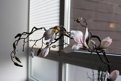March 15, 2016 (THE ZEN DIARY by David Gabriel Fischer) Tags: david flower gabriel window photography photo diary journal buddhism minimal zen mindfulness meditation fischer zazen