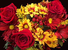 Vibrant (Cher12861) Tags: flowers red roses stilllife floral yellow daisies arrangement deepcolors bej iphone5s flowershopseries