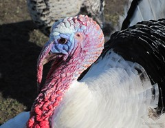 True colors (Max Jongkoen) Tags: colors turkey kleuren kalkoen