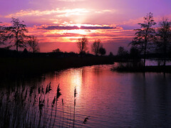 Sunset (STEHOUWER AND RECIO) Tags: blue trees sunset red orange lake holland reed water netherlands dutch clouds island zonsondergang scenery aqua meer blauw colours view nederland magenta silhouettes rood plas oranje waterscape kleuren barendrecht southholland gaatkensplas