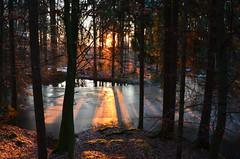 DSC_0319 Eine frostig schöne Atmosphäre am abend im Wald -    A frosty lovely atmosphere at evening in the forest (baerli08ww) Tags: winter sunset forest germany deutschland sonnenuntergang sundown wald rheinlandpfalz westerwald rhinelandpalatinate westerforest