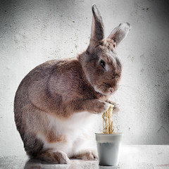 When owner is at work (Jeric Santiago) Tags: pet rabbit bunny animal conejo ramen lapin hase kaninchen instantnoodles   compositephotography fineartsphotography winterrabbit