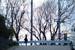 (Yorozuna / ) Tags: tree silhouette japan   kanagawa slope kawasaki      yurigaoka      asaoward pentaxautotakumar55mmf18