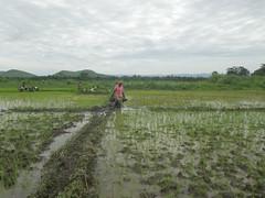 RIMG1123 (WorkingVillages) Tags: congo ruzizi wvi southkivu workingvillages