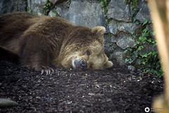 _DSC5874 (alessandro.spagnolli) Tags: zoo ngc natura tamronlens naturalistica lecornelle parcofaunistico sonyalpha77