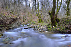 Reencounter/Reencontrarse (JCarlos.) Tags: longexposure tree musgo verde forest river hojas arboles bosque largaexposicin afluente