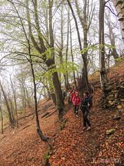 Escursione in Val Malone (gabriferreri) Tags: trekking hiking valle alpi montagna salamandra bosco malone camminare faggeta pezzata