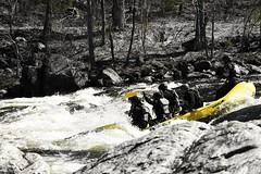 #ThrowBackThursday #TBT #MooseRiver  #Adirondacks  #adventure #NorthEast #IG_NorthEast #IG_NorthAmerica  #IG_UnitedStates  #WhiteWaterRafting  #WhiteWater #rafting #InflatableBoat #adventurer #travel #traveller #TravelGram  #NewYorkers #river #rapids #wil (faisal_halim) Tags: travel trees wild nature wet water river fun whitewater tour paddle adirondacks rapids traveller adventure rafting northeast whitewaterrafting newyorkers tbt adventurer nikonphotos mooseriver inflatableboat natureporn throwbackthursday travelgram ignorthamerica igunitedstates ignortheast
