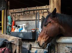 Horse.RockCreekStablesDC042416.2167 (jrm_rr) Tags: horse dc washington head stable rockcreekpark rockcreekparkhorsecenter rcphc