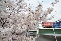 20160401-DSC_4721.jpg (d3_plus) Tags: street sky plant flower nature japan nikon scenery wideangle daily bloom  cherryblossom  sakura streetphoto yokohama     dailyphoto  kawasaki thesedays superwideangle      tamron1735  a05   tamronspaf1735mmf284dildasphericalif tamronspaf1735mmf284dildaspherical d700  nikond700 tamronspaf1735mmf284dild tamronspaf1735mmf284