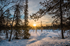 Morning Gold (Markus Trienke) Tags: morning trees winter sun snow cold ice sunrise canon finland landscape eos frozen finnland lappland fi kittil 70d pallashusky