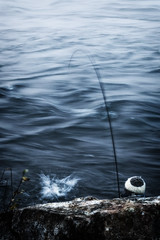 Catch!! (ebarria_alpha) Tags: chile morning travel blue fish art nature water beauty wow river landscape amazing cool fantastic fishing view sony awesome great creative dream best dreams imagine 37 moment alpha tamron niebla valdivia increible
