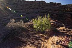 20160323-IMG_2414_DXO (dfwtinker) Tags: arizona water rock stone sunrise sand desert w page dfw whitaker glencanyondam pageaz kevinwhitaker dfwtinker ktwhitaker worthtexastraveljapan whitakerktwhitakerktwhitakervideomountainstamron