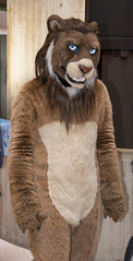 _DSC7924 (Acrufox) Tags: midwest furfest 2015 furry convention december hyatt regency ohare rosemont chicago illinois acrufox fursuit fursuiting mff2015