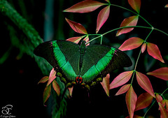 Miracle (BeNowMeHere) Tags: trip travel color colour nature animals turkey butterfly colorful miracle istanbul colourful 500px ifttt benowmehere canyouseethemiracle