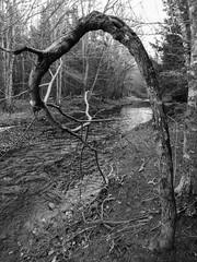 Stroll down Dobson Trail (Moncton Guy) Tags: fujifilm dobsontrail xf1