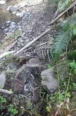 tillamookhike15 (jcravens) Tags: oregon forest hike campground galescreek stateforest tillamookforest
