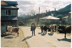 (tayn3) Tags: travel film analog 35mm georgia asia cows kodak brother olympus ishootfilm 400 soviet caucasus silkroad analogue centralasia olympusom2 poncho exsoviet olympusom2n svaneti mestia ultramax400 filmlife traveldeeper