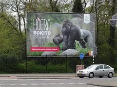 Rotterdam: Bokito Billboard (harry_nl) Tags: netherlands zoo rotterdam blijdorp nederland billboard 2016 20jaar diergaarde bokito