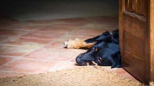 The lazy dog - Amalfi, Italy - Animals photography