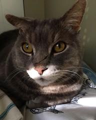 Cuddles (alexandrahall17) Tags: morning sun green cat happy bed sleep weekend kitty duke pillows meow cuddles cateye