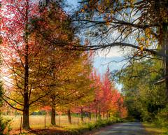 IMG_6036_7_8_tonemapped (newbs216) Tags: autumn trees landscape hdr mtwilson