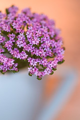Tiny flowers in an espresso cup :) (lara_1012) Tags: flowers plant flower macro cup bright blossom pastel espresso