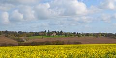 Lyndon Hall (AndyorDij) Tags: uk trees england panorama tree field unitedkingdom fields rutland lyndon oilseedrape 2016 lyndonhill lyndonhall
