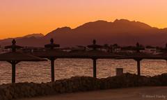 Umbrellas (Ahmed Dardig) Tags: travel sunset sea landscape photography dahab redsea egypt mount explore umbrellas southsinai
