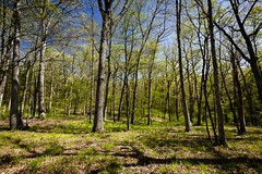 Shooting Star Trailhead (Notley) Tags: trees nature forest landscape spring outdoor trail missouri april serene 2016 10thavenue notley boonecountymissouri notleyhawkins missouriphotography httpwwwnotleyhawkinscom notleyhawkinsphotography shootingstartrailhead