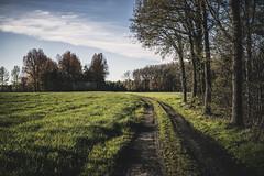 Sunday. (ZjeromePhotography) Tags: life road sun green love nature 35mm fun freedom woods nikon belgium walk sunday wandering d600 freeyourmind
