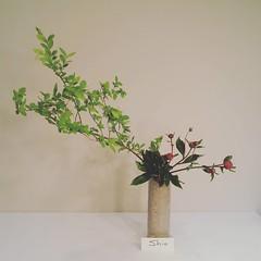 Shio's #ikebana