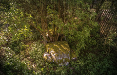 DSC_8148 (Photographe-Runner) Tags: auto graveyard car lost decay beetle cox voitures coccinelle urbex abandonn