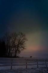 Silent night (Tracey Rennie) Tags: winter sky horse snow night fence stars nightscape alberta aurora moonlight dogpound littledoglaughedstories