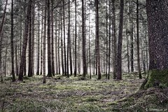 wald | forest (lichtmaler.at) Tags: trees tree green meadow wiese grn bume baum