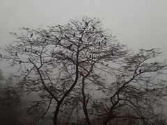 Birds #fog (red,she said) Tags: fog
