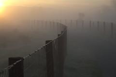 Eastshore park fog (lenswrangler) Tags: california statepark park morning grass fog sunrise fence berkeley outdoor path meadow dew mclaughlin eastshore digikam eastbayparks ebparks sylviamclaughlin rawtherapee lenswrangler
