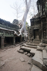 Angkor Wat, Cambodia (Ch0jiN) Tags: travel tree overgrown canon temple ancient asia roots angkorwat jungle overgrowth 1022 10mm