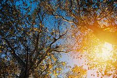 Fall (Sareni) Tags: park autumn trees light sky sun tree fall colors october branches serbia center citypark vojvodina twop srbija nebo 2014 banat drvo grane boje svetlo jesen svetlost centar sunce drvece alibunar juznibanat sareni suncevizraci